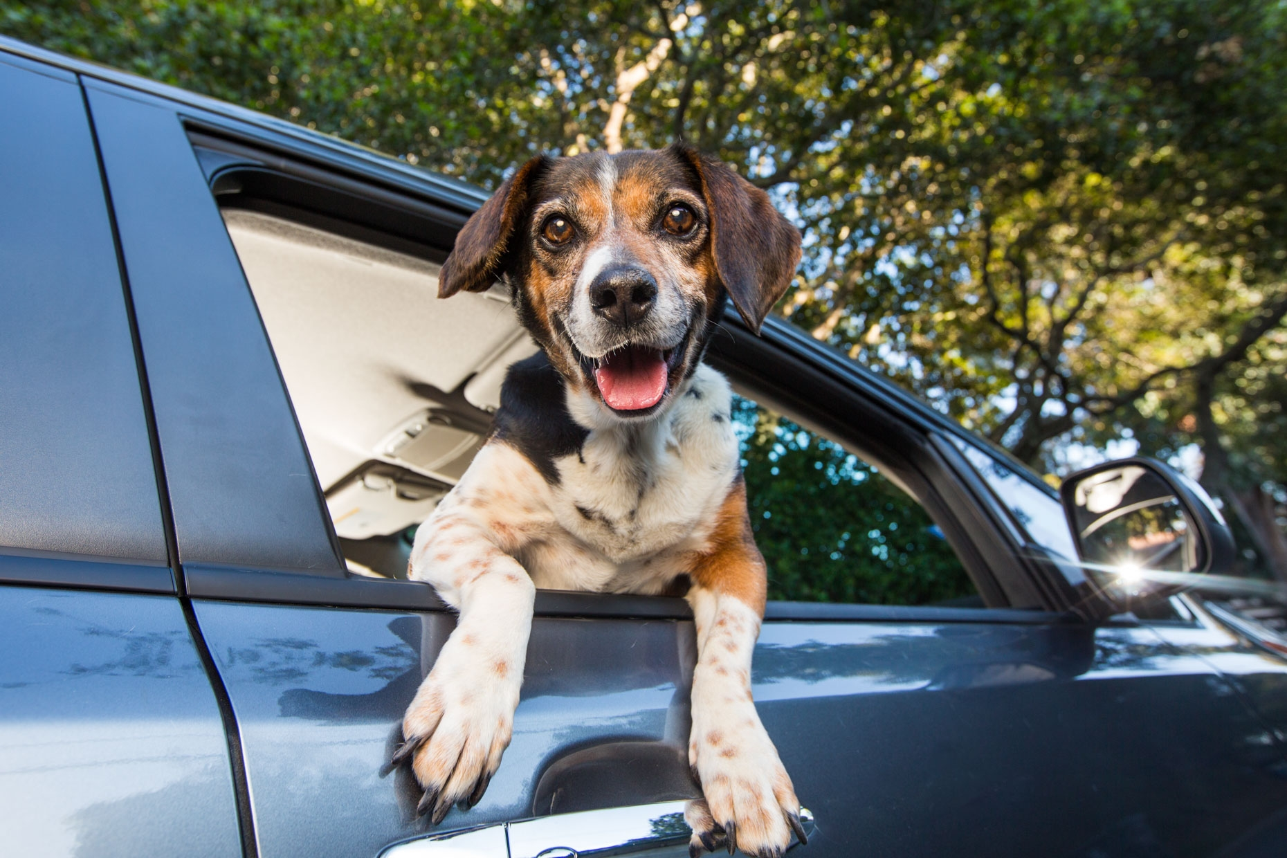 cão dentro de carro aberto