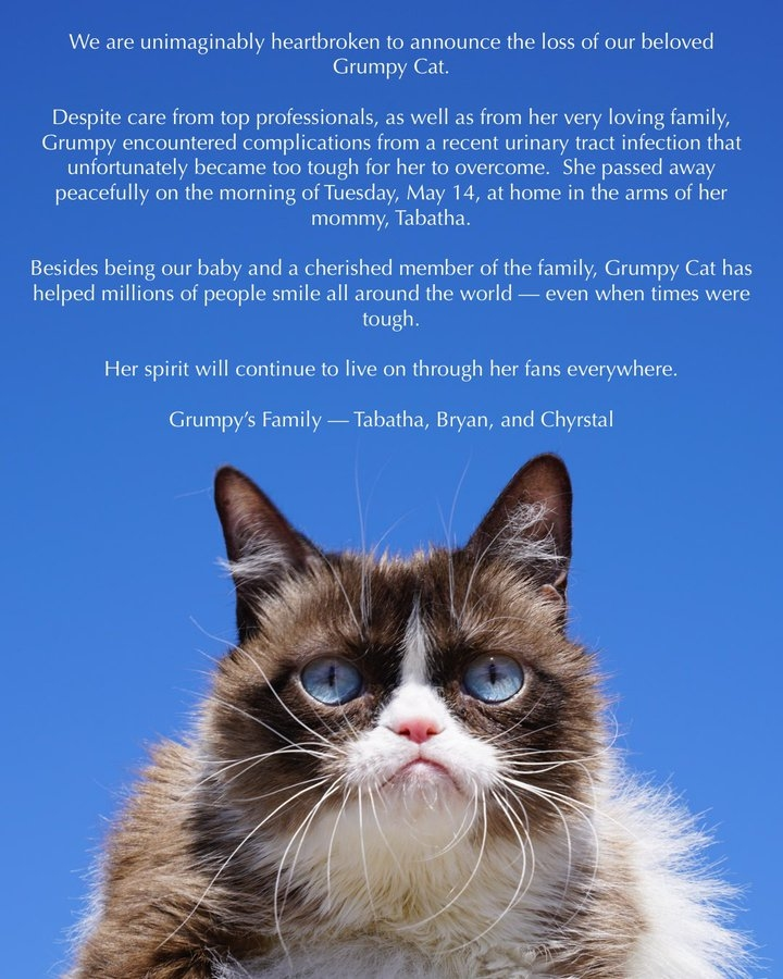 comunicado sobre morte gato