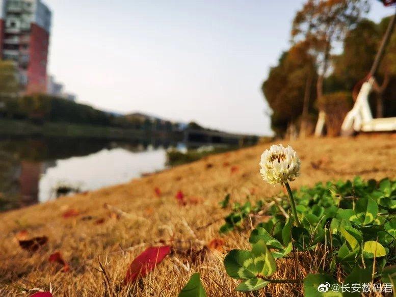 imagem Huawei p40 pro