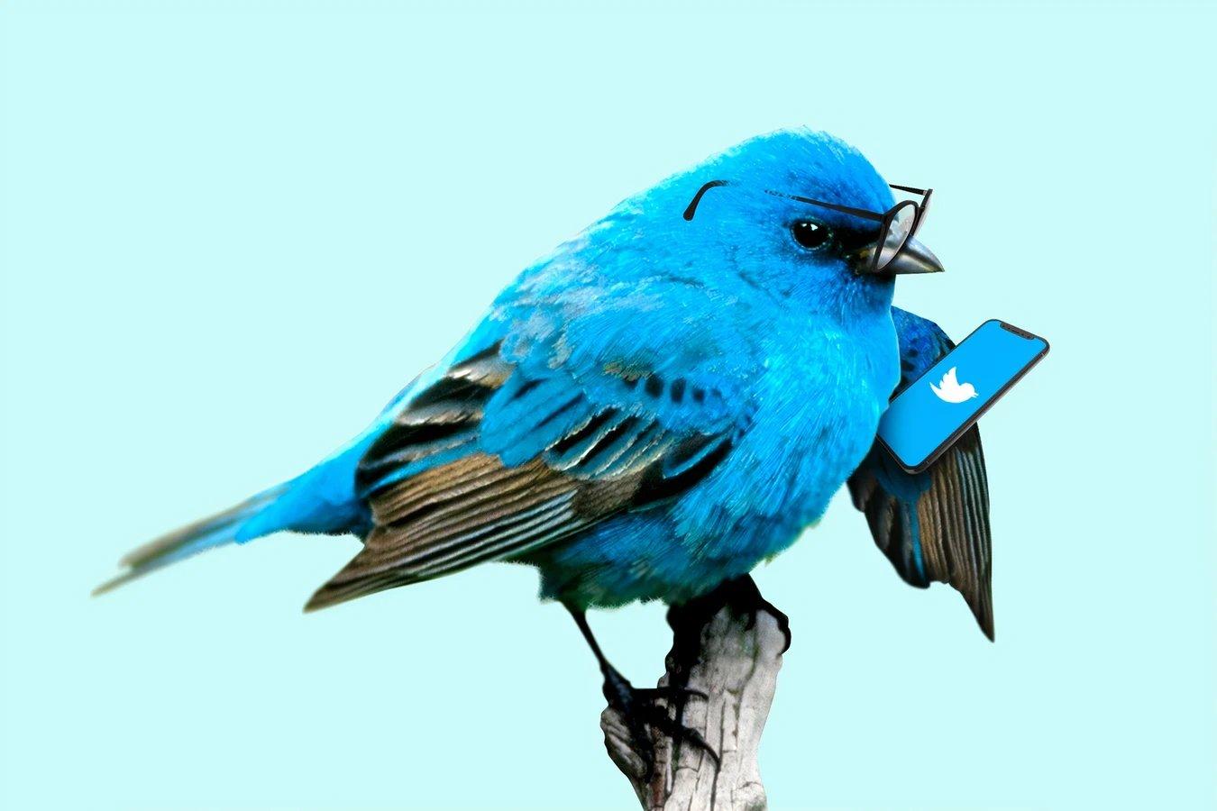 Twitter passaro azul