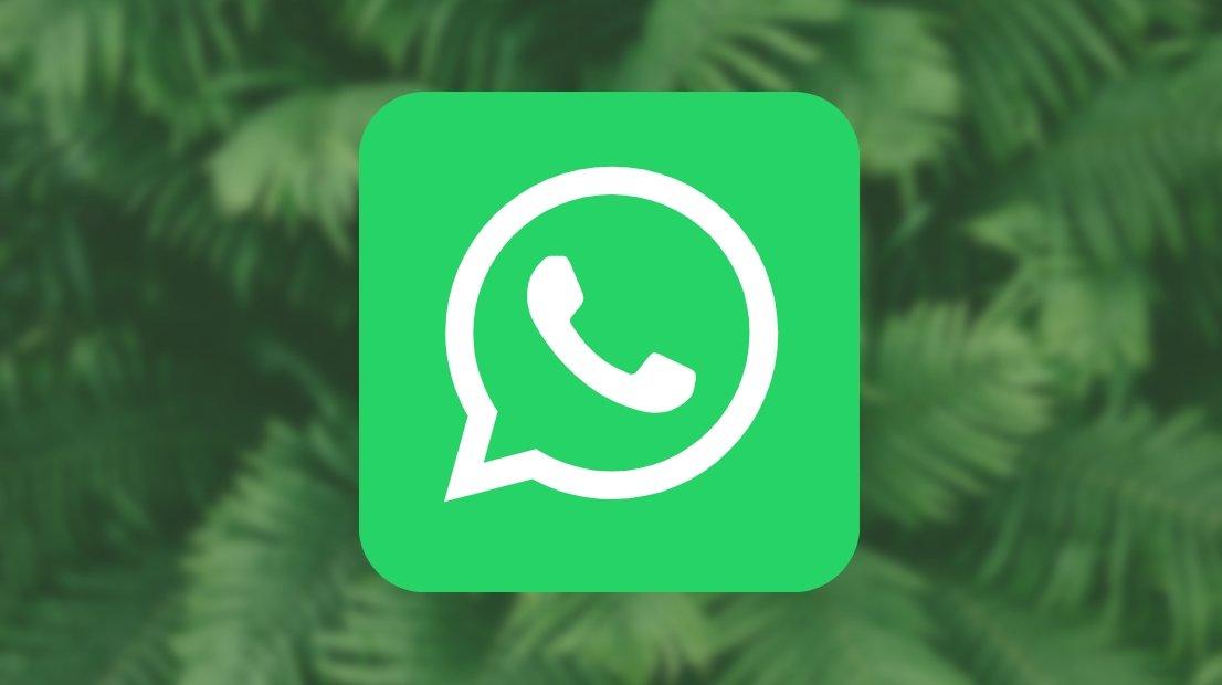 WhatsApp logo sobre selva