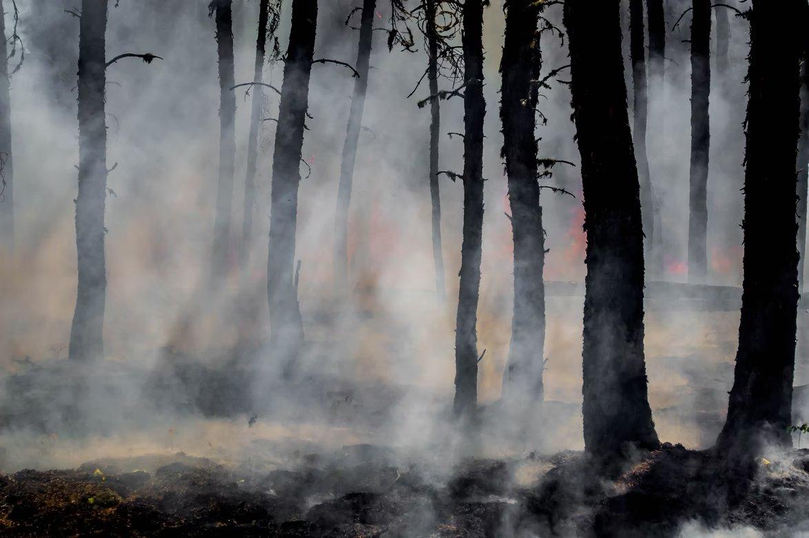 Incêndio em floresta